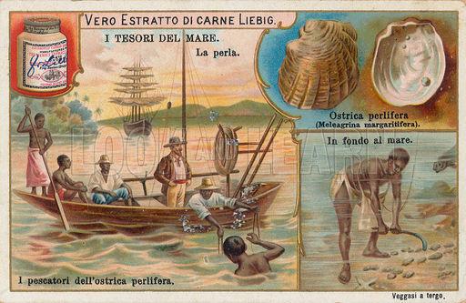 pescuitori de perle
